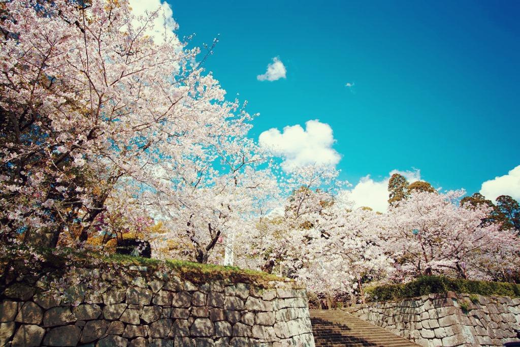 高鍋町 | 観光 | 高鍋城桜まつり~桜と人と暮らふと2017~ | 高鍋 ...
