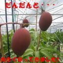 takanabe_cho.jpg